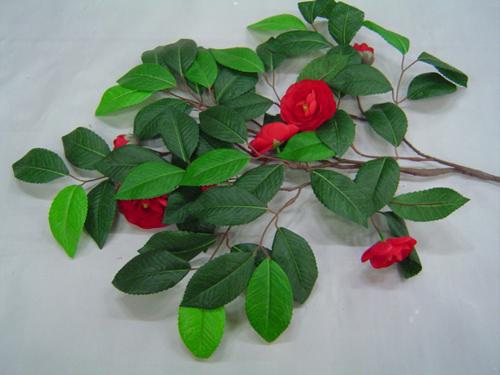 동백나무 잎과 꽃