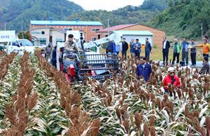 충북농업기술원, 신품종 잡곡 기계수확으로 해결