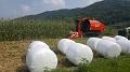 괴산군, 논 이용 사료작물 재배기술 보급