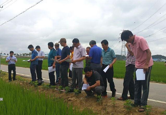 당진시농업기술센터, 우렁이 농법으로 잡초 방제한 '소비벼' 생육 양호