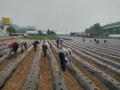 경기도 농기원 콩 적기 파종 생육초기 관리 중요