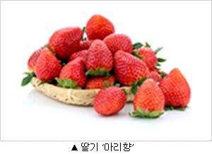딸기 아리향