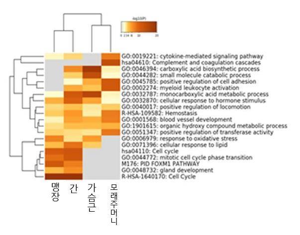 그림입니다. 원본 그림의 이름: 조직별 유전자 기능.JPG 원본 그림의 크기: 가로 603pixel, 세로 474pixel