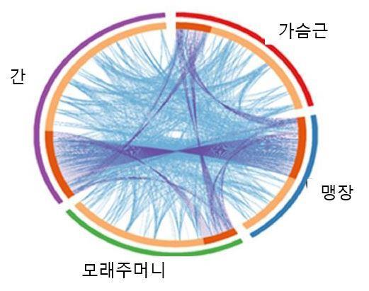 그림입니다. 원본 그림의 이름: 차등발현 유전자의 상호작용.JPG 원본 그림의 크기: 가로 521pixel, 세로 411pixel