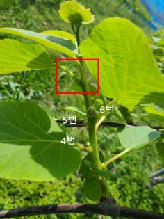 그림입니다. 원본 그림의 이름: CLP000133fc0003.bmp 원본 그림의 크기: 가로 405pixel, 세로 584pixel
