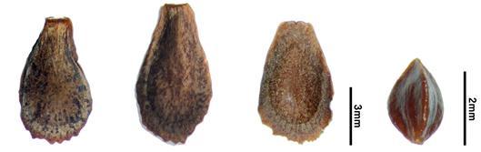 종자모양 비교
