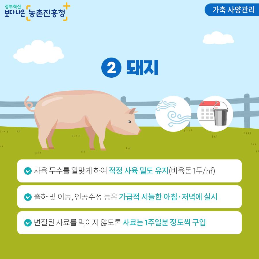 가축 사양관리 - 돼지